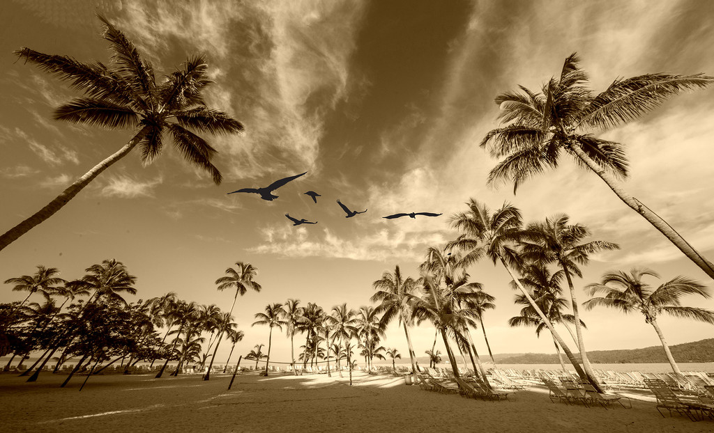 Birds Above Paradise by pdulis