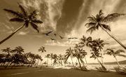 24th Dec 2015 - Birds Above Paradise