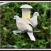 Collared doves by rosiekind