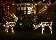 2nd Dec 2015 - Christmas lights