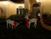 13th Dec 2015 - Christmas display