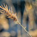 More Bokeh than Frost by milaniet