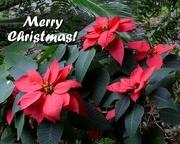 25th Dec 2015 - Merry Christmas
