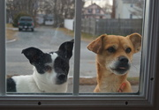 21st Dec 2015 - Can We Come In?