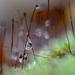 Nature's Jewels! by fayefaye