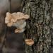 Tree fungus by loweygrace
