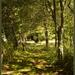 Walking through the Woods by nickspicsnz