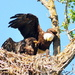 The Eagle Family by stownsend