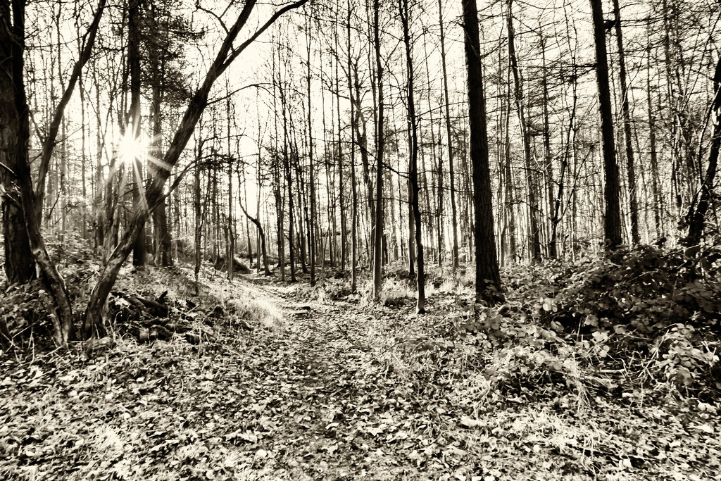 2015 12 29 Through the woods by pamknowler