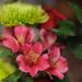 Christmas bouquet by loweygrace
