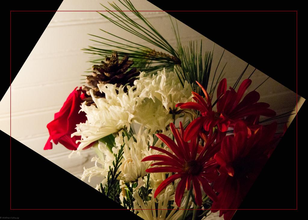 Christmas flowers by randystreat