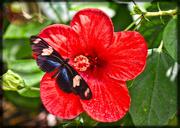 29th Dec 2015 - Pollinating