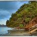 NZ Xmas tree by rustymonkey