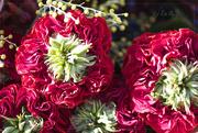 1st Jan 2016 - Red-Eye Roses