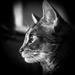 Cat's eye by berelaxed