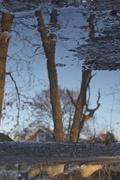 2nd Jan 2016 - Puddle Reflections - Flipped