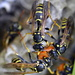 Now I Know Where All Of The Wasps Are Coming From_DSC9443 by merrelyn