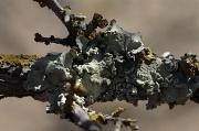 25th Nov 2010 - Overlapping Lichens