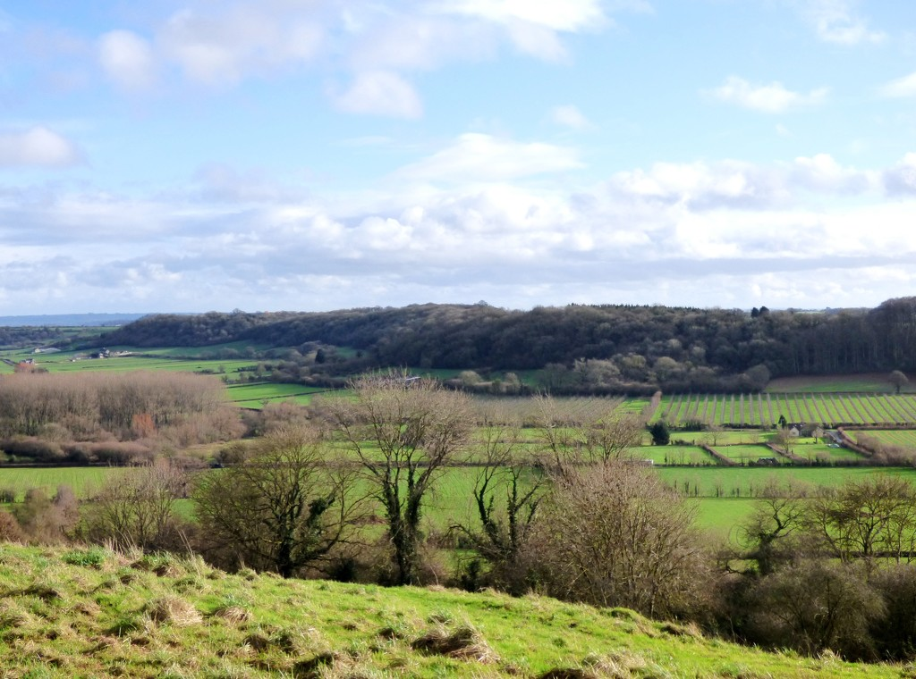 Winter towards Pitney Wood by julienne1