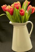 4th Jan 2009 - Tulips