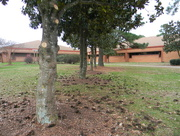 4th Jan 2016 - Trees at My Old High School
