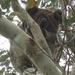 ahoy by koalagardens