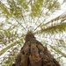 Emailing: tree fern as shot but with kind of weird effect by maree_sanderson