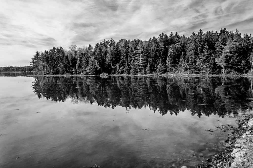 Trees- reflection- ocean by joansmor