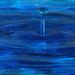 water droplets_61:365 by gaylewood