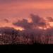 Red sky at night! by shirleybankfarm