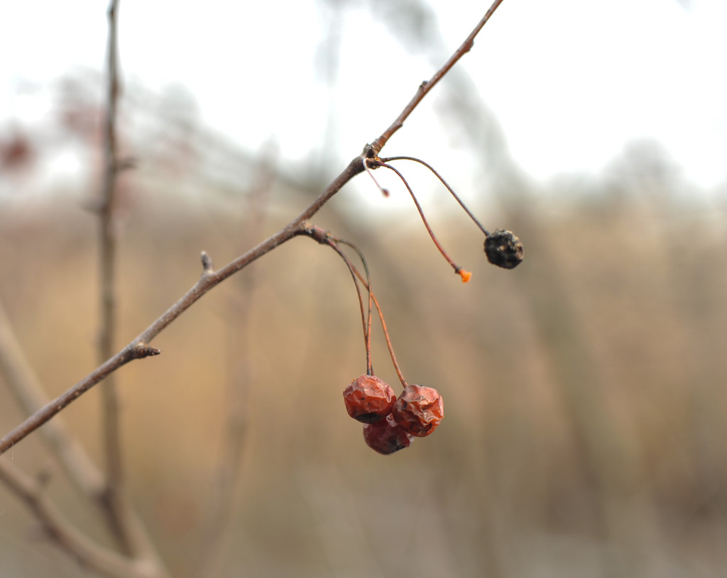 Wrinkled berries by loweygrace