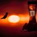 Sunset Hummingbird by stray_shooter