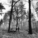 Walk in the woods by overalvandaan