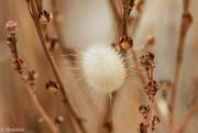 2nd Jan 2016 - Beautiful weeds
