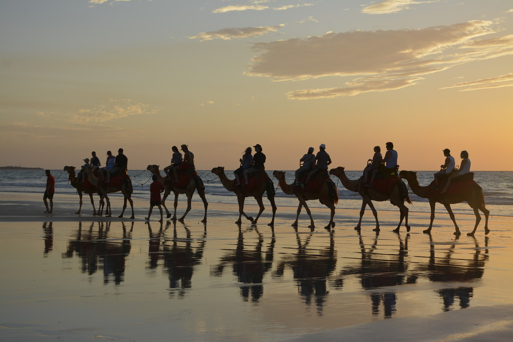 Camels At Sunset_DSC0102 by merrelyn