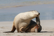 4th Jan 2016 - Doing the Sea Lion stretch
