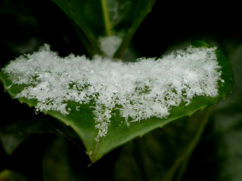 First snow by geertje