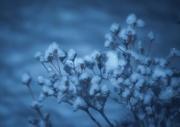 12th Jan 2016 - First Snow Fall