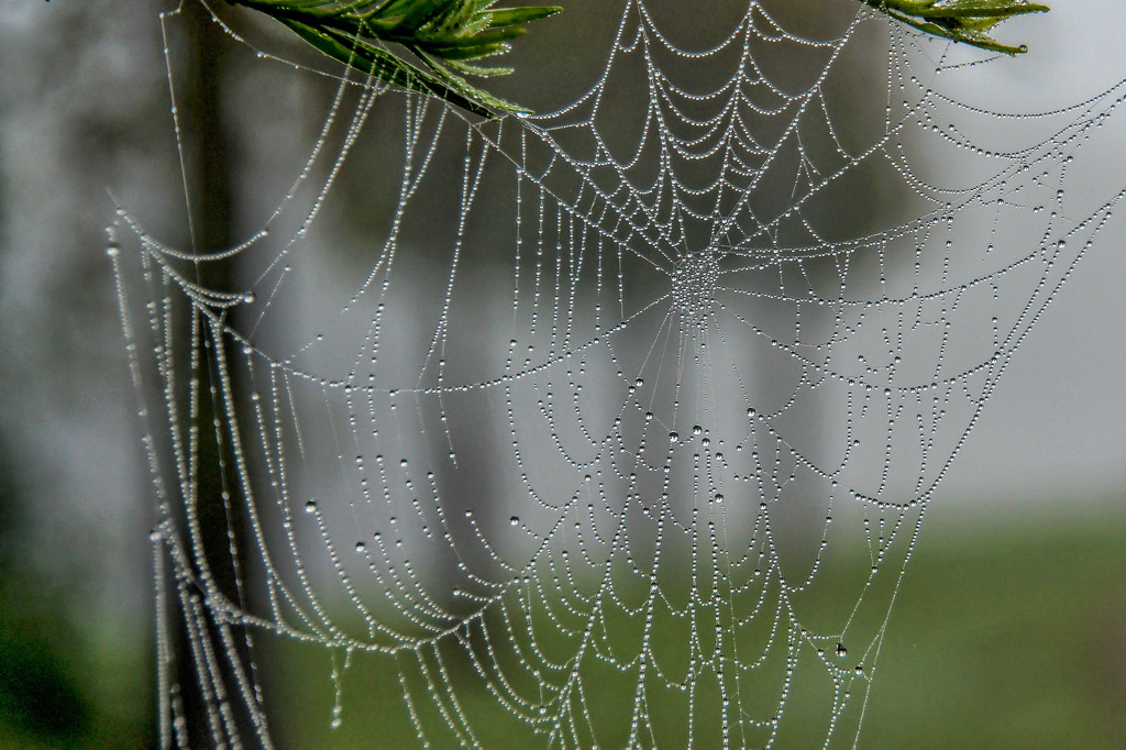 Watch out for the spider webs! by danette
