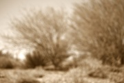 14th Jan 2016 - landscape sepia blur