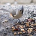 Tufted Titmouse Breakfast on Broadway by berelaxed