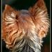 Puppy Texture by digitalrn