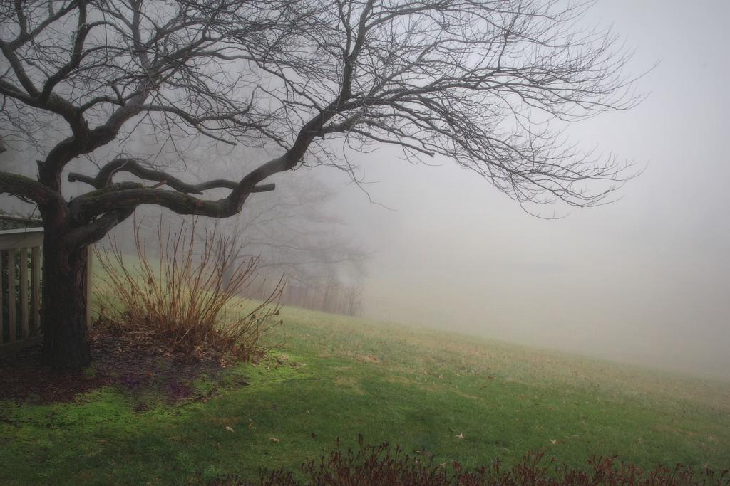 Foggy by calm