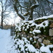 Winter wonderland. by shirleybankfarm
