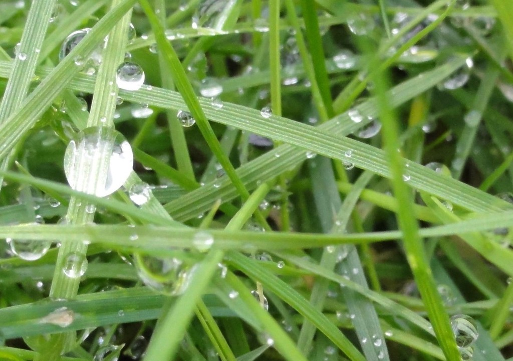 Grasses and dewdrops  by beryl