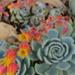 Flowers by alia_801