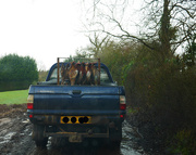 16th Jan 2016 - Following a Load of Pheasants......