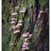 Tiny Fungi.. by julzmaioro