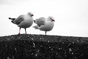 20th Jan 2016 - Two Birds, Three Legs