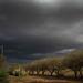 Still not a drop of rain.... by sdutoit